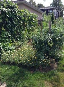 Backyard garden, Vancouver