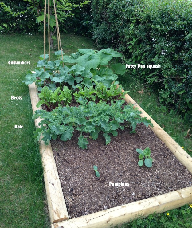 Garden #2 mid season